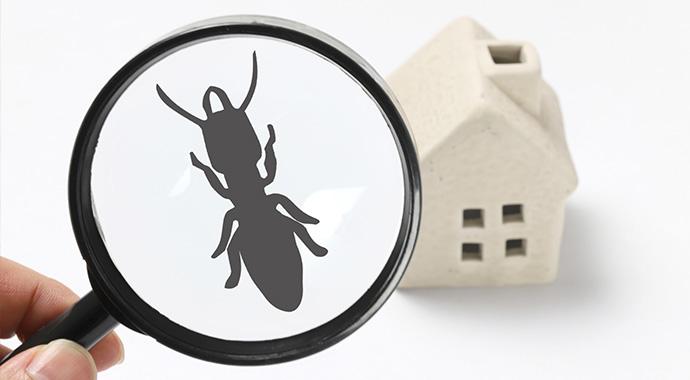 白アリは黒アリの仲間?
